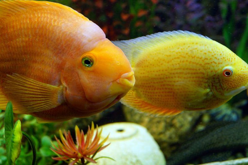 Bangalore Aquarium