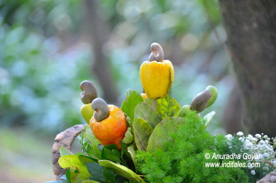 Cashew Fruit & Nut