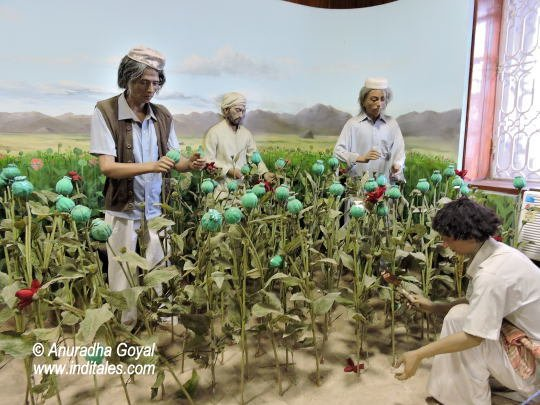 Opium Plantation displays at Indian customs and central excise museum