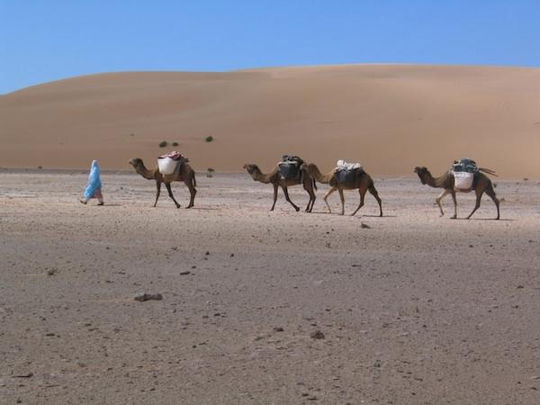 Paula Constant with her Caravan in Sahara Desert