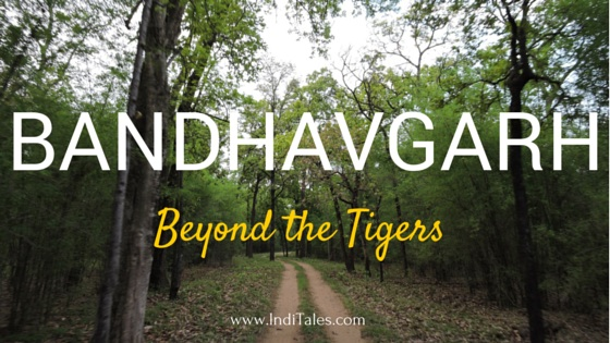 Bandhavgarh National Park beyond tigers