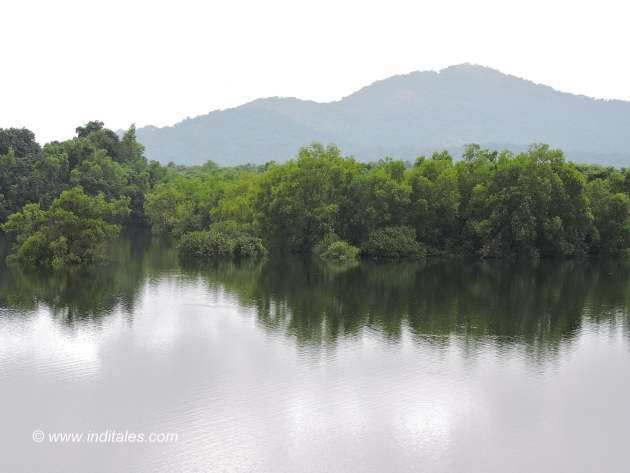 Backwaters of Salaulim dam