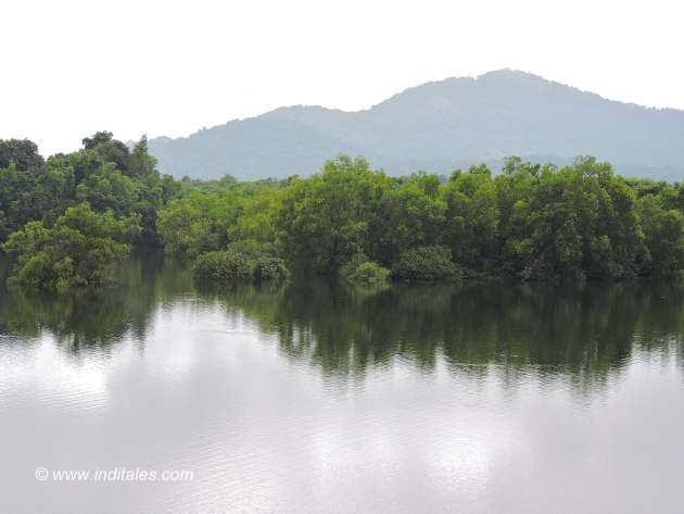 Backwaters of Salaulim dam