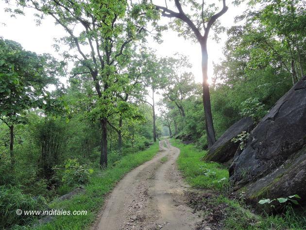 Pathway at Kanha national park