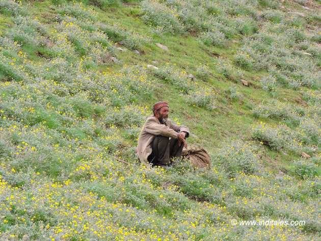 Shepherd at Chandratal Lake
