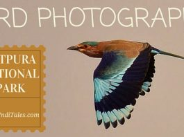 Indian Roller Bird Photography