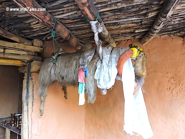 Stuffed goat hanging at Dhankar Monastery, Spiti Valley, Himachal Pradesh