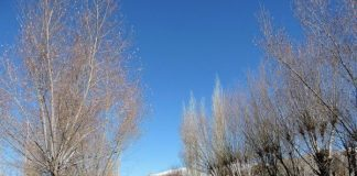 Drive towards Pangong Lake in Ladakh