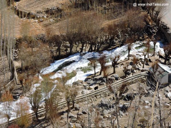 A frozen stream flowing towards Chemdey Monastery