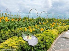 Sunflower Garden at Changi Airport Terminal 2