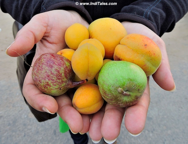 Handful of fruits from Thanedhar, Narkanda