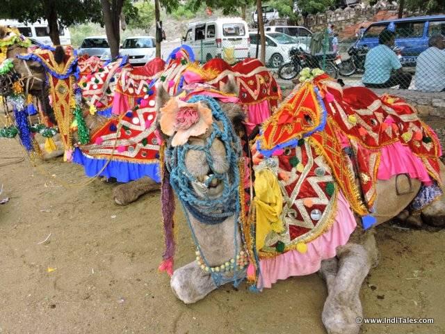 Camels outside Maharana Pratap Memorial, Haldighati