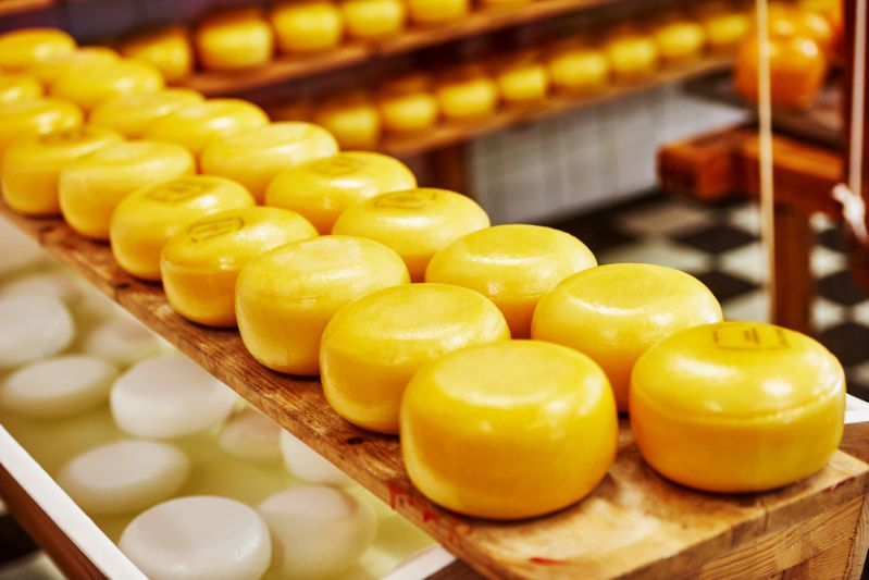 Gouda Cheese Processing