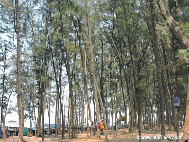 Trees along Jampore Beach, Daman, India