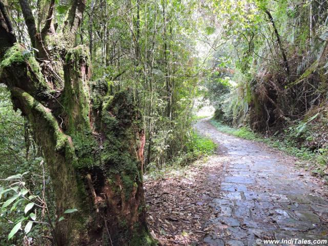 Narrow path through lush greenery leading to Rabdentse palace ruins at Pelling Sikkim