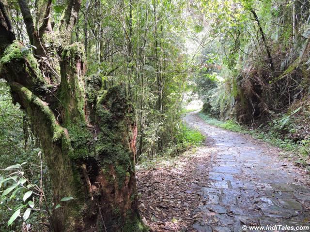 Narrow path through lush greenery leading to Rabdentse palace ruins at Pelling Sikkim