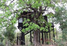 Luxury Tree House at Pench National Park