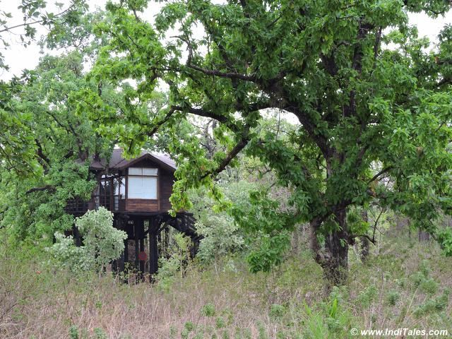 Luxury Tree House at Pench Earth Lodge, Pench National Park