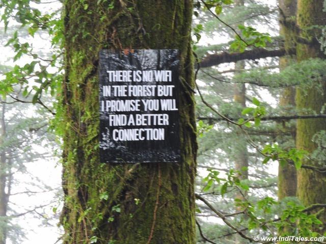 Tree boards at Landour