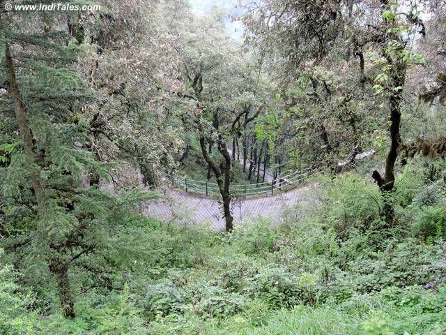 Walking trail at Landour