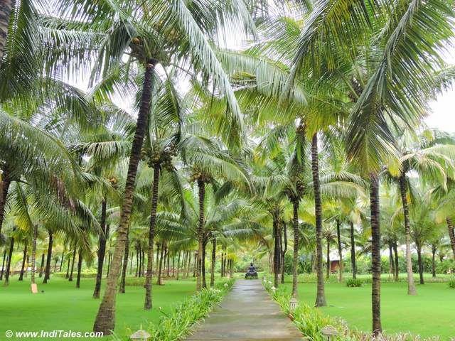 Coconut Trees on Konkan Coast