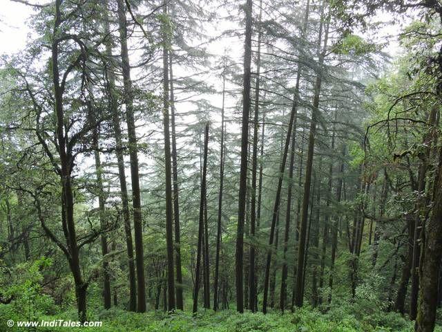 Trees you walk along...