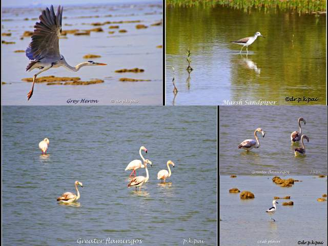 Birds at Marine National Park, Narara, Jamnagar