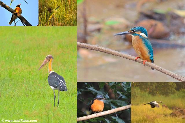 Birding in South Goa - Places to visit in South Goa