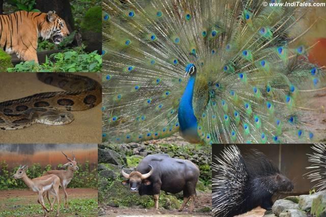 Bondla Wildlife Sanctuary & Zoo, South Goa