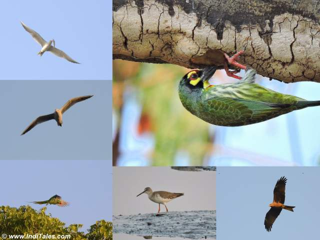Images of Birds at Sewri Mumbai
