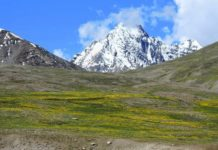 Flowers & Snow at Kunzum Pass