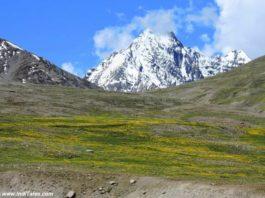 Flowers & Snow at Kunzum Pass