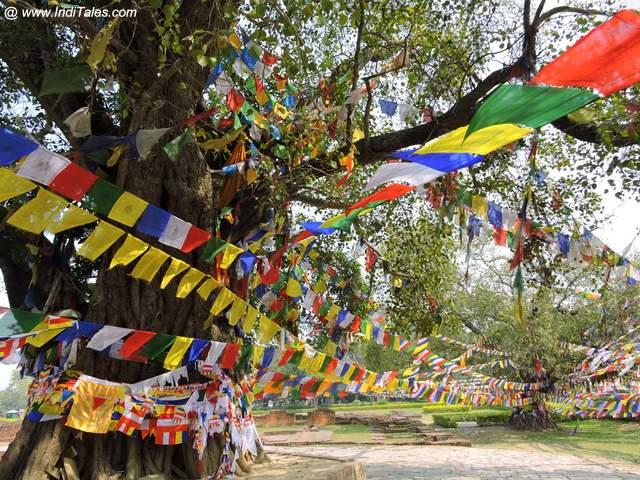 Prayer Flags - Bodhi Tree - Lumbini - Nepal