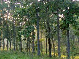 जंगल सफारी भारत के राष्ट्रीय उद्यानों में