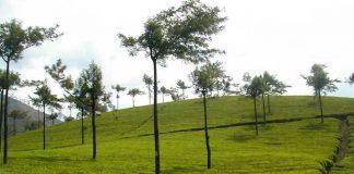 Tea Gardens at Munnar of Popular Kerala
