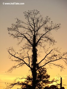 A ree at sunset - looking back at 2006, Happy New year