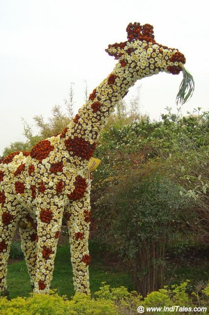 Floral Giraffe during the Flower Show