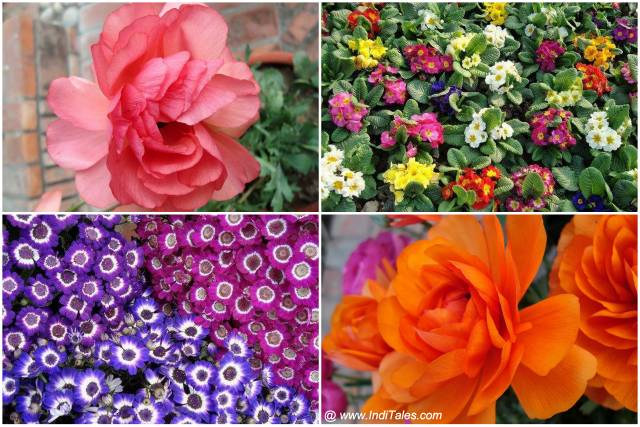 Colorful flowers collage at Garden of 5 Senses