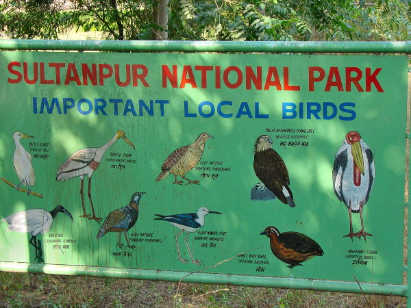 Resident birds of the bird sanctuary