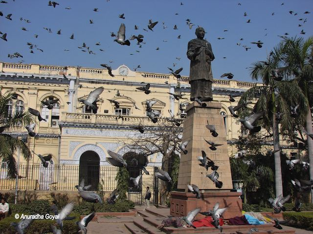Pegions at Swami Shraddhanand statue outside town hall in Shahajahanabad
