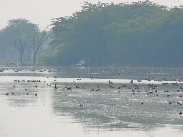 Waterbirds at the sanctuary