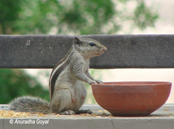 Squirrel - who ate my breakfast pose
