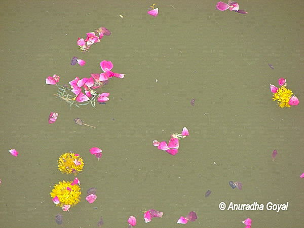Floating flowers and petals offered at the Lake