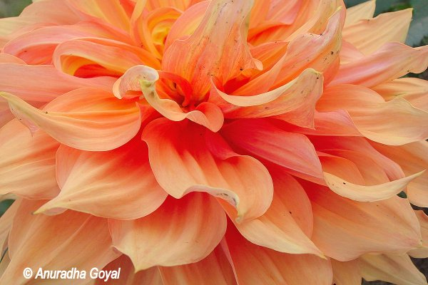 Flowers at Bihar