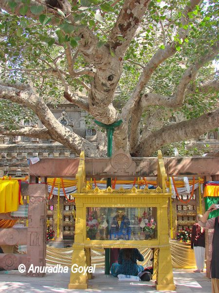 The Mahabodhi Tree, Bodh Gaya