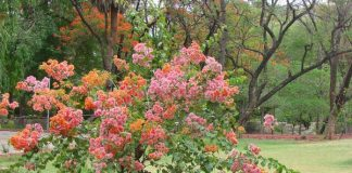 Colorful Trees at Indira Park, Hyderabad