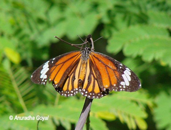 Butterfly at Butterfly garden