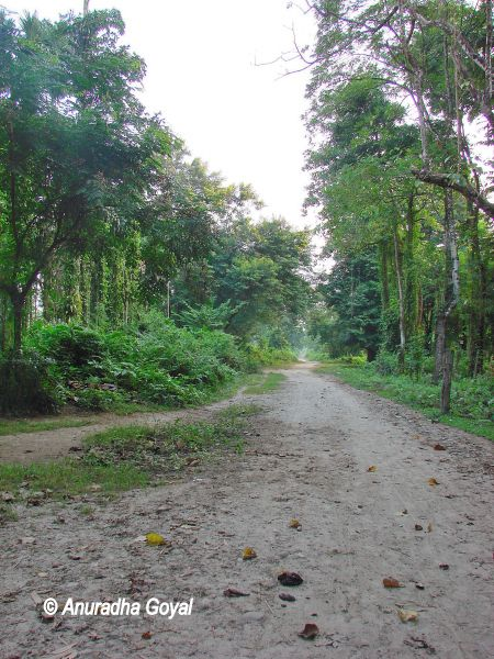 Explore the jungles - the mud path