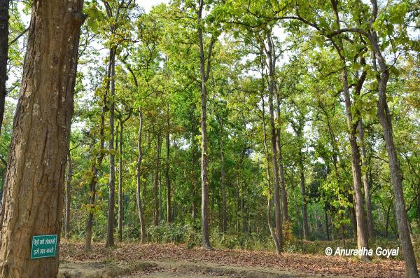 Dense Forests of Achanakmar Wildlife Sanctuary