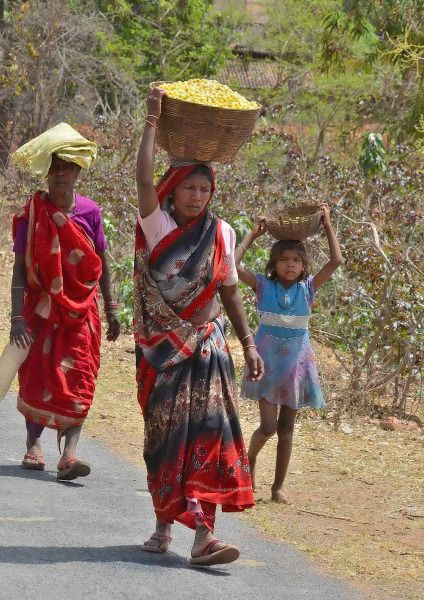 Tribals with basket full of Mahua flowers